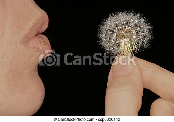 Make a wish - csp0026142
