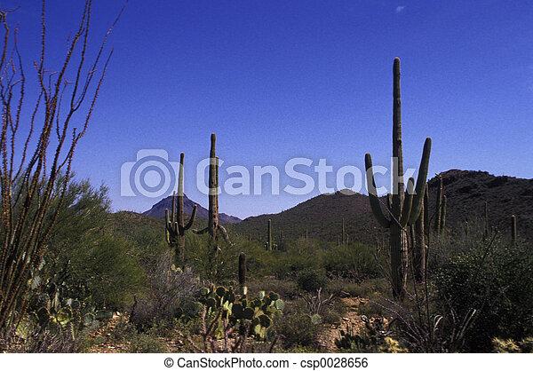 Arizona desert - csp0028656