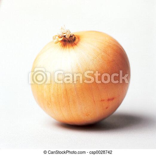 onion - csp0028742