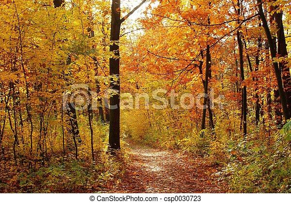 Fall - csp0030723