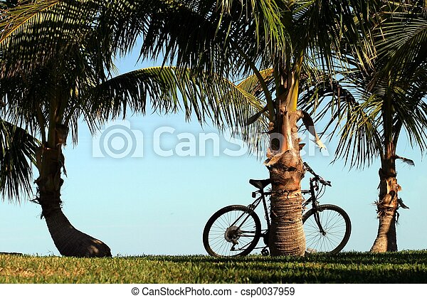 自転車, やし - csp0037959