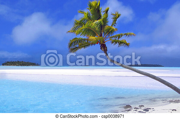 paume, paradis - csp0038971