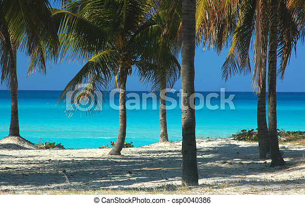 Caribbean Sea - csp0040386