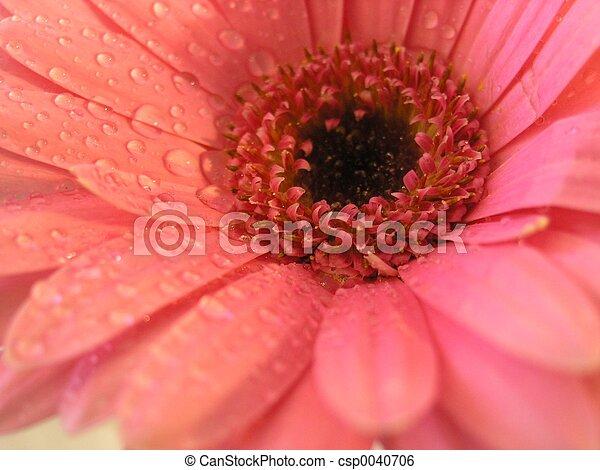 Flowers 03 - csp0040706