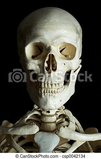 A human skull on black background