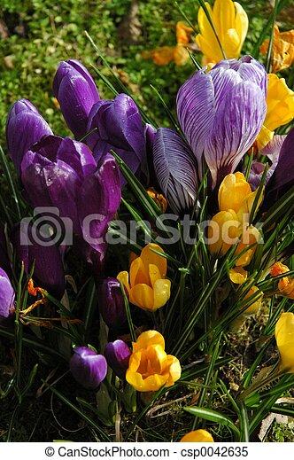 spring! - csp0042635