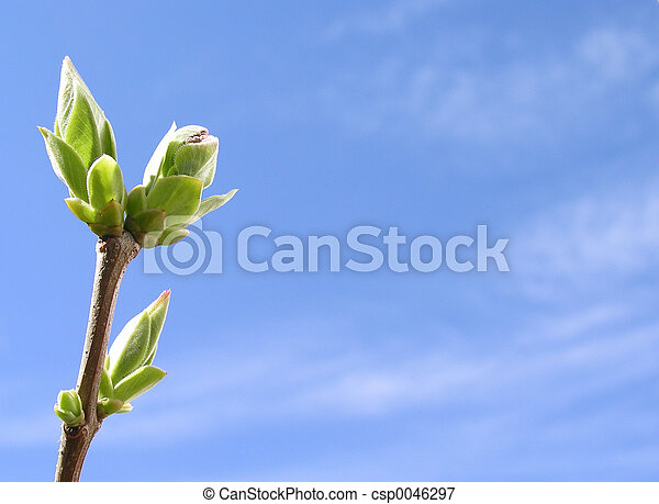 primavera, tempo - csp0046297