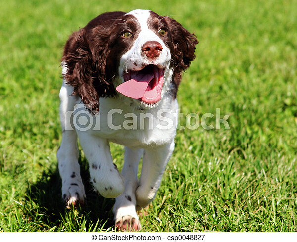 hund, glücklich - csp0048827