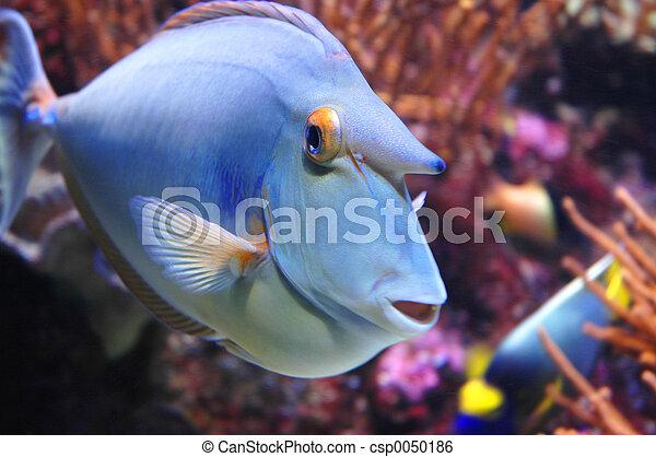 pez, marina - csp0050186