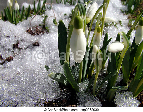 First flower, spring