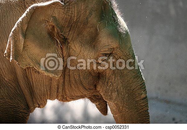 huvud, elefant - csp0052331