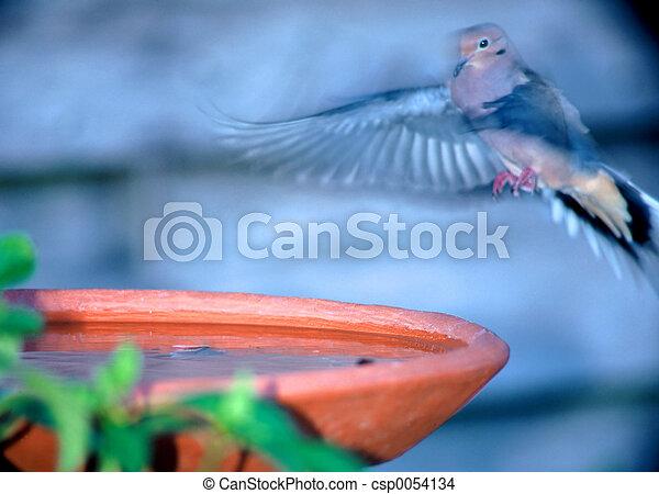 Landing at Bird Bat - csp0054134