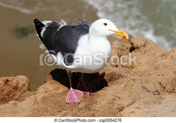 Seagull - csp0054276