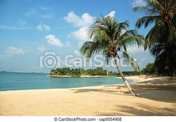 Beach - csp0054958