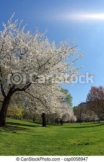 primavera - csp0058947