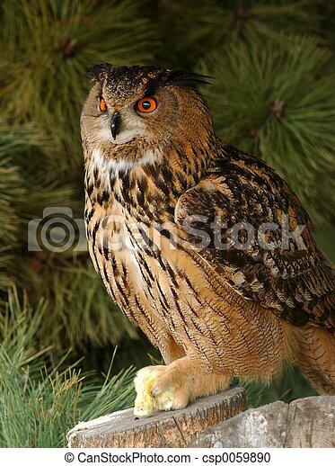 Eagle owl with prey. - csp0059890