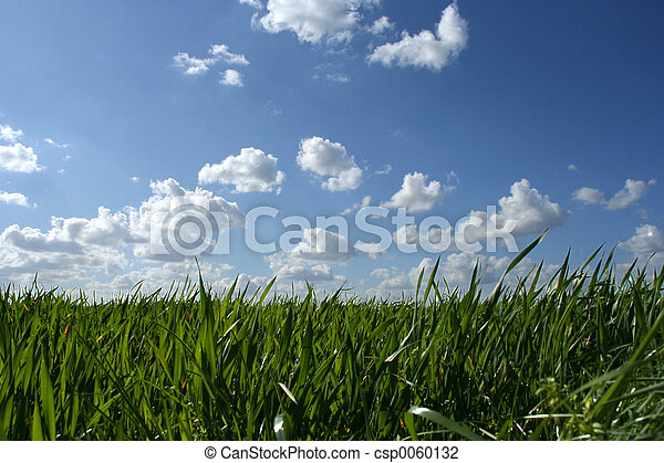 Grass and cloudy sky - csp0060132