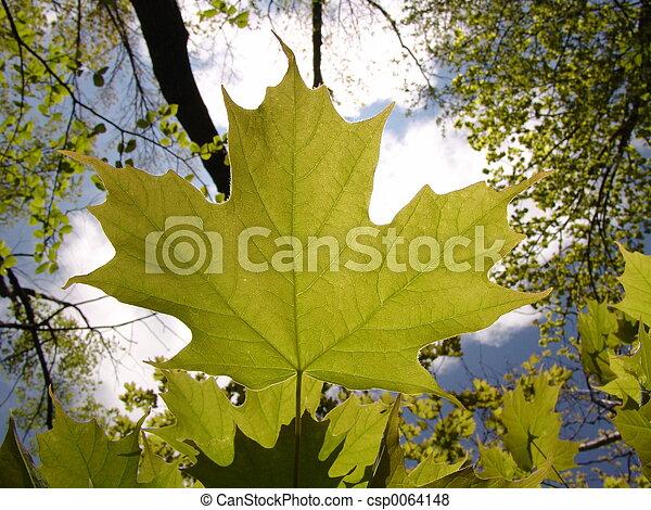 Oh Canada - csp0064148