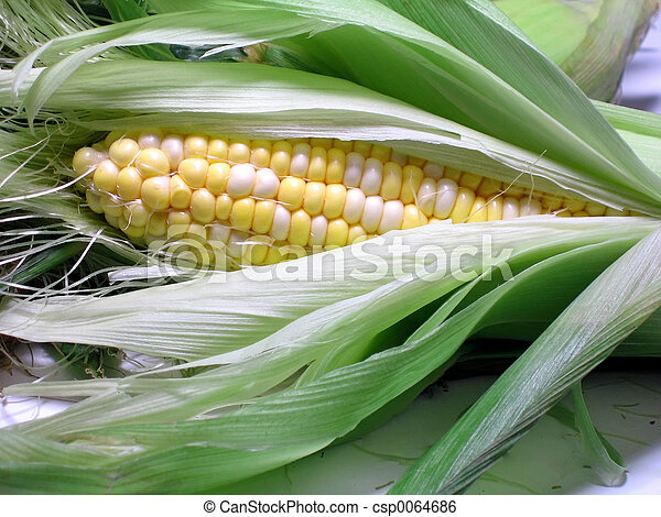 Corn On The Cob - csp0064686