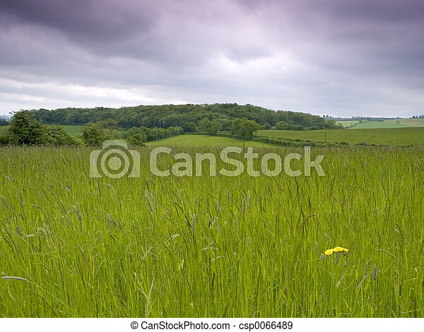 Grassy Meadow - csp0066489