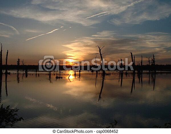 Swamp Sunset - csp0068452