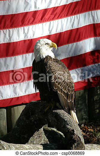 A photo of a bald eagle posing in front of an American flag.