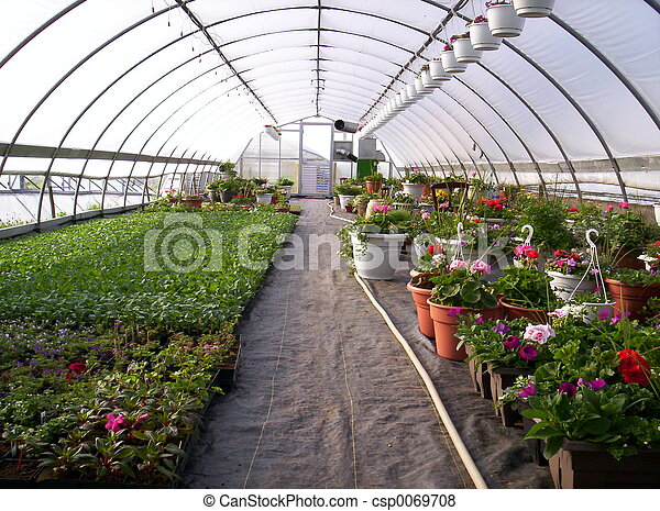 Greenhouse plants - csp0069708