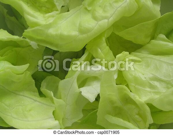 fresh lettuce #2 - csp0071905