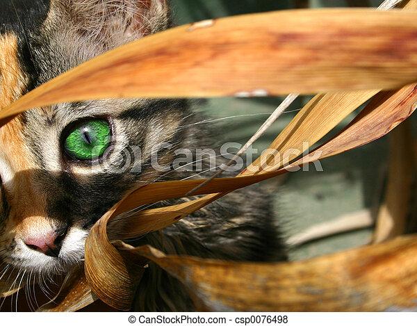 Kitten Eye