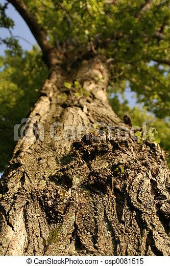 樹 - csp0081515