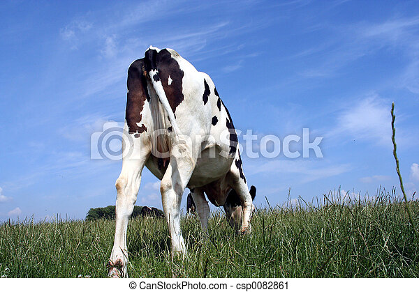 grazing cow - csp0082861