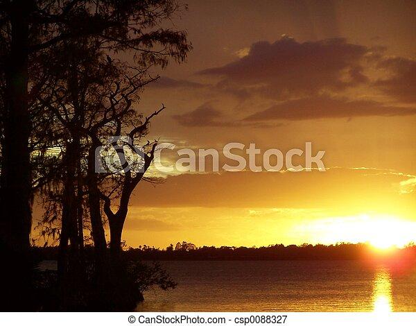cipresso, tramonto - csp0088327