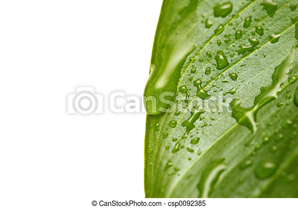 water droplets on leaf - csp0092385