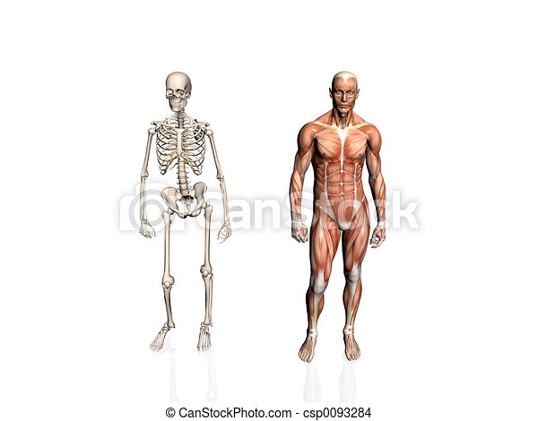 Anatomy of the man with skeleton.. - csp0093284
