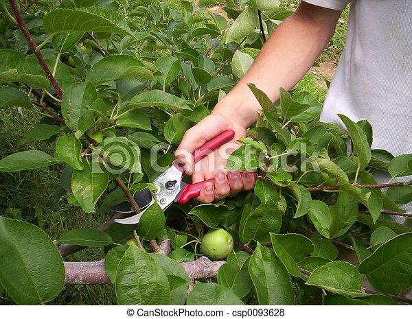 Summer Trees Fruit Summer Pruning Trees