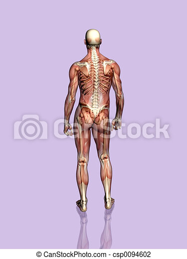 Anatomy a muscular man, transparant with skeleton. - csp0094602
