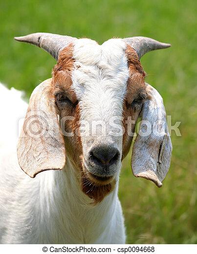 Billy Goat - csp0094668
