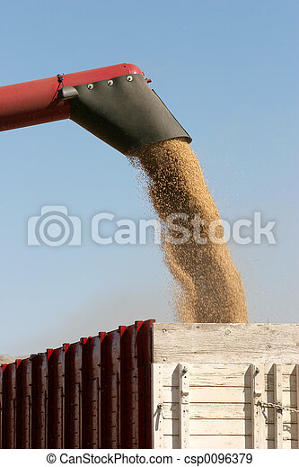 harvesting barley - csp0096379
