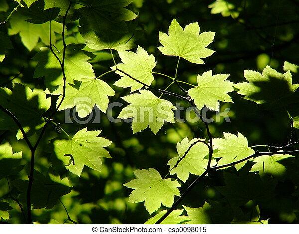green leaves - csp0098015