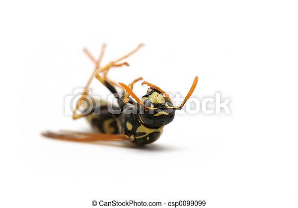 dead wasp - csp0099099