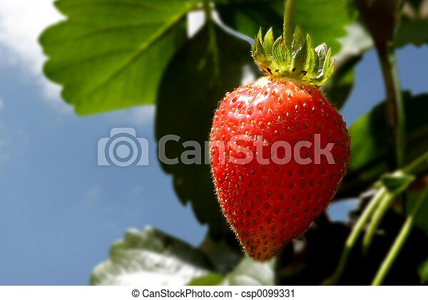 Strawberry plant - csp0099331