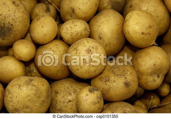 New Potatoes - csp0101350