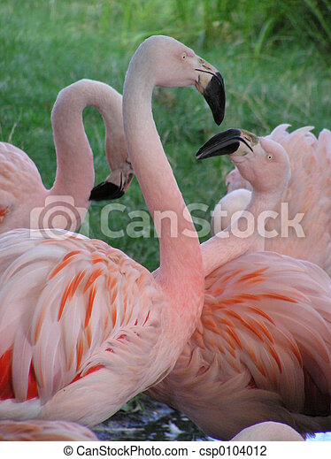 Flamingo Fight 2 - csp0104012