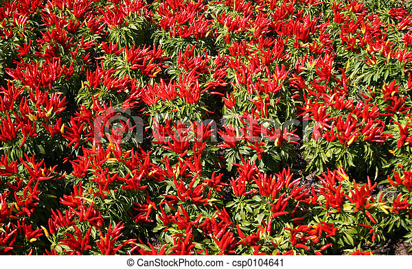 Chilly Pepper Patch - csp0104641