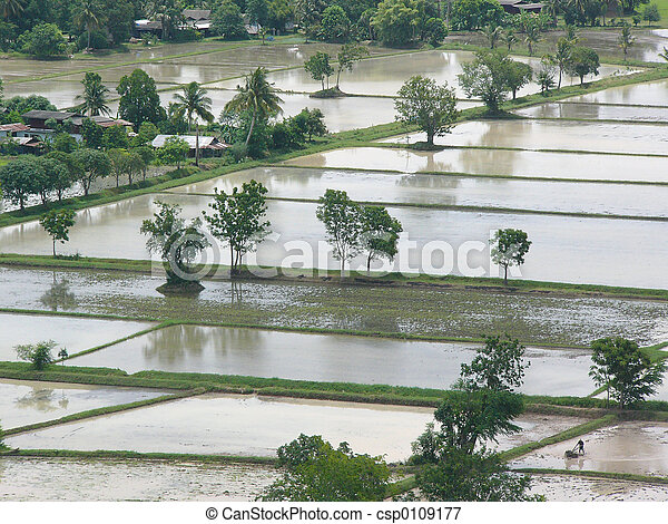 Flooded paddy fields - csp0109177