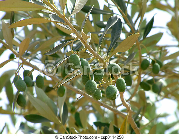 Bunch of olives - csp0114258