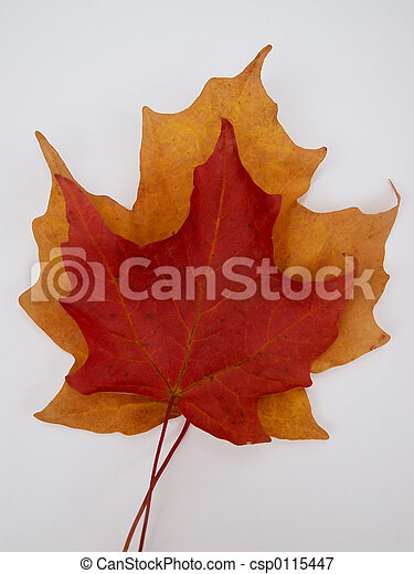 fall leaves - csp0115447