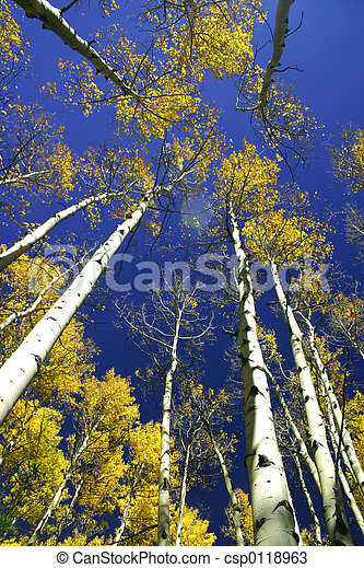 Aspen Cathedral - csp0118963
