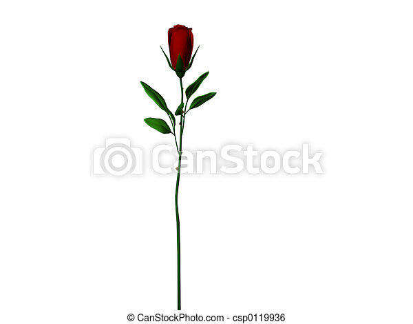 Long Stem Rose - csp0119936