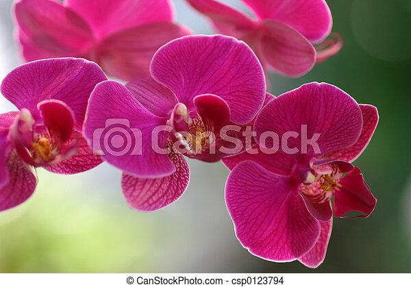 stock foto von orchidee 1 sehr nett lila farbe csp0123794 suchen sie stock bilder. Black Bedroom Furniture Sets. Home Design Ideas